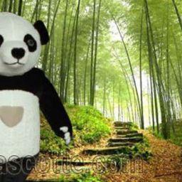 Fabrication Mascotte Sur Mesure Panda (mascotte gonflable sur mesure).
